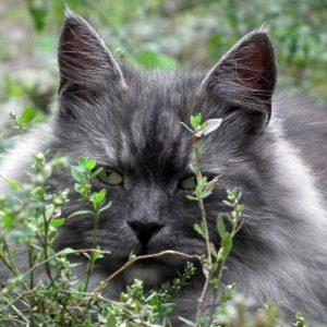 Foder til katte med særlige behov