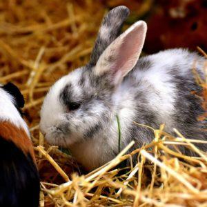 Kanin & Gnaver