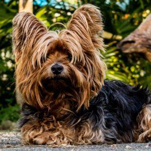Foder til hunde med særlige behov