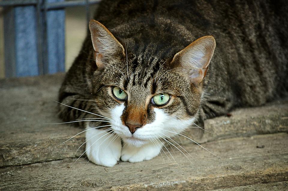 Tilbehør, legetøj og foder til kat fra Rolfsminde Foder