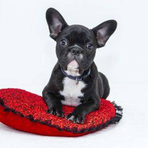 Tilbehør og pleje til hunde