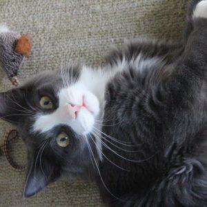 Tilbehør og pleje til katte