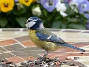 Vildtfuglefrø