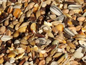 Hannes blanding er kvalitetsfoder til fjerkræ, lokalproduceret, uden GMO, uden kemiske vitaminer og uden tilsætningsstoffer.